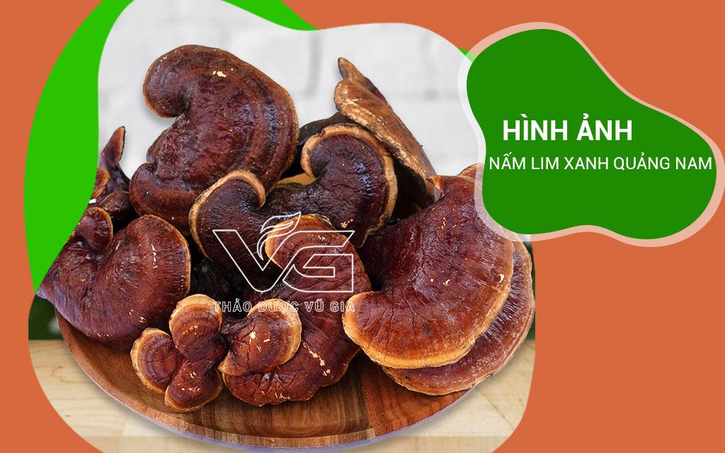 Hình Ảnh Nấm Lim Xanh Quảng Nam